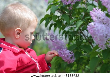 spring theme #1: A small boy touch the flowers lilac tree - stock photo