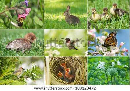 Spring themed collage with Spring insects,  animals, and flowers. - stock photo