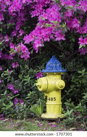 Spring time Azaleas blooming around a fire hydrant the historic district in Savannah Georgia - stock photo