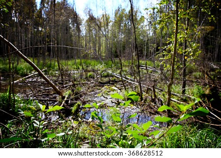 spring time swamp scene with green leafs - stock photo