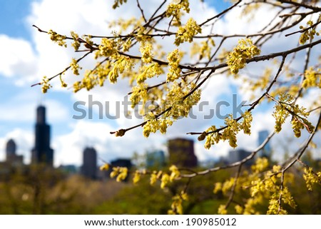 Spring time trees in Chicago, Illinois with silhouetted skyline - stock photo