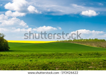 Spring time with blue sky and green wheat fields