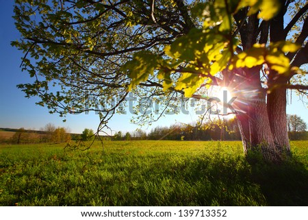 Spring tree with fresh green leaves on a blooming meadow at sunset - stock photo