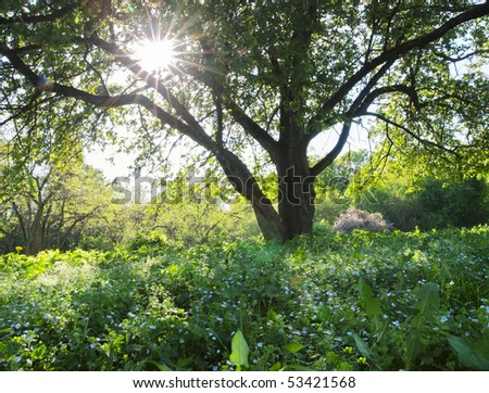 Spring tree with Sun throughout crown - stock photo