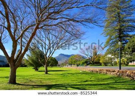 Spring trees along morning street in town. Shot in August, Stellenbosch, South Africa. - stock photo