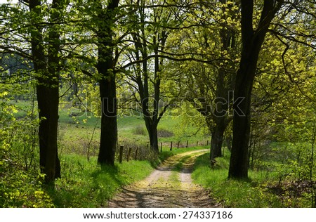 Spring trees and dirt road