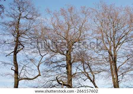 Spring trees on blue sky. - stock photo