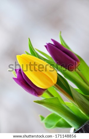 Spring tulip bouquet - yellow and purple tulips in a vase. - stock photo