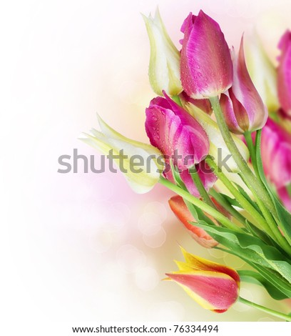 Spring Tulip Flowers border design - stock photo