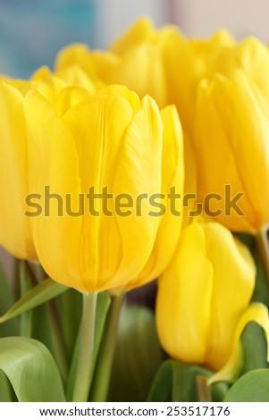 Spring tulips - stock photo