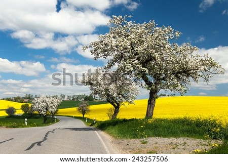 spring view of road with alley of apple tree and rapeseed field  - stock photo