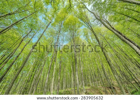 Spring view of the trees in the deep mountain forest. - stock photo