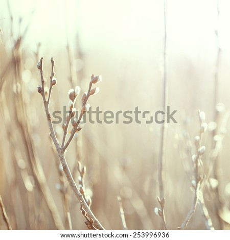 spring vintage buds on branches in field  - stock photo