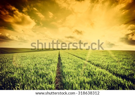Spring vintage landscape with green wheat field and majestic sky