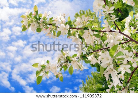 spring white blossom against blue sky - stock photo