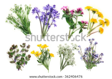 Spring wildflower selection over white background. Stichwort, bluebell, rose campion, dandelion, ground ivy, buttercup, cow parsley and forget me not. Left to right, top then bottom row. - stock photo