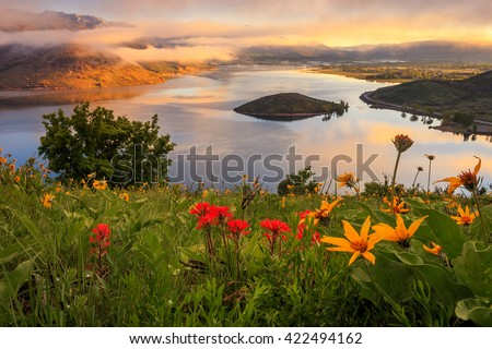 Spring wildflowers above Heber Valley at sunrise, Utah, USA. - stock photo