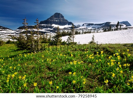 Spring Wildflowers in Glacier National Park - stock photo