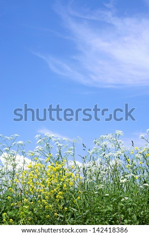 Spring wildflowers on a background of blue sky - stock photo