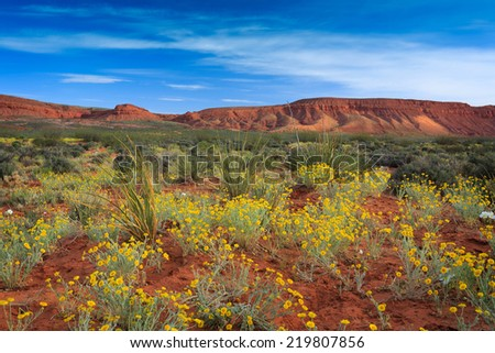 Spring wildflows enliven the vibrant red desert of historic Fort Pierce nearby St. George, Utah. - stock photo