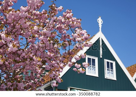Spring with blossom tree in the town of Marken, that used to be an iisland in the former Zuiderzee (Southern Sea), the Netherlands - stock photo
