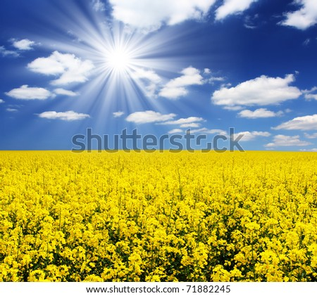 spring yellow field and beautiful blue sky - stock photo