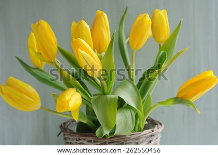 Spring yellow tulips bouquet in basket - stock photo