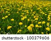 Springflowers in a Field shallow DOF - stock photo