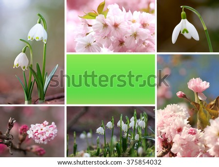 springlike collage with cherry blossoms and snowdrops, free space for your text