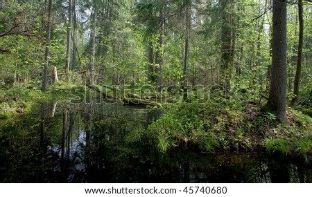 Springtime alder-bog forest with standing water - stock photo