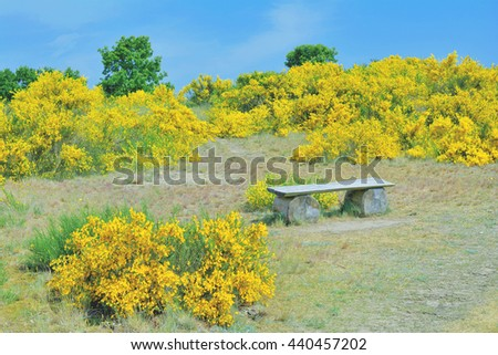 Springtime at Moenchgut Biosphere Reserve on Ruegen Island at Baltic Sea,Mecklenburg western Pomerania,Germany - stock photo