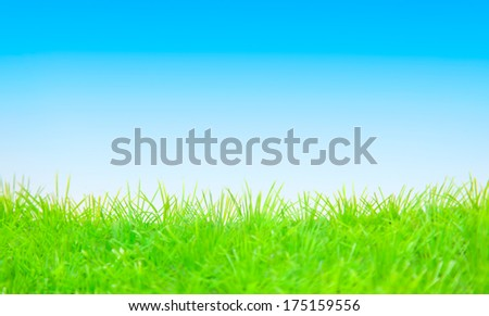springtime background green blue copyspace - stock photo