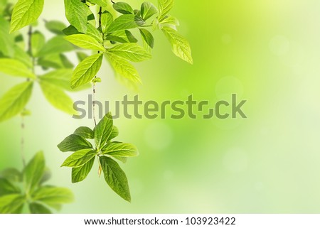 Springtime background with green leaves - stock photo