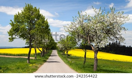 springtime beautiful view of road, alley of apple tree, field of rapeseed and sky with clouds  - stock photo