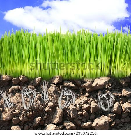 Springtime, conceptual image - stock photo