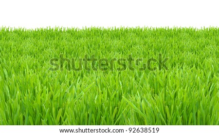 Springtime, fresh green grass lawn isolated on white background - stock photo