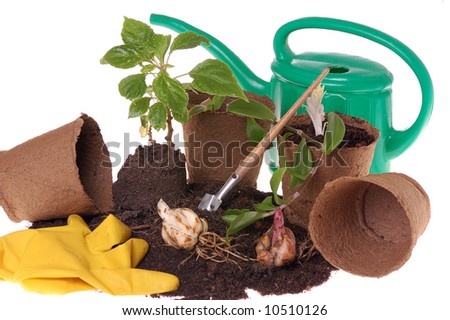 springtime  home gardering- potting plants  in peat pots - stock photo