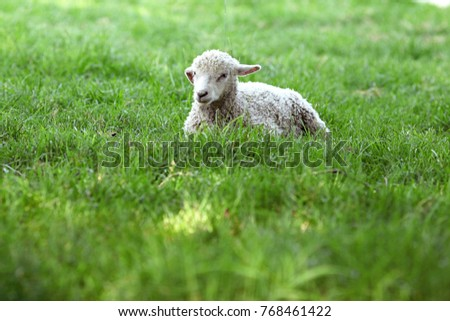 Springtime Is The Time For Baby Lambs