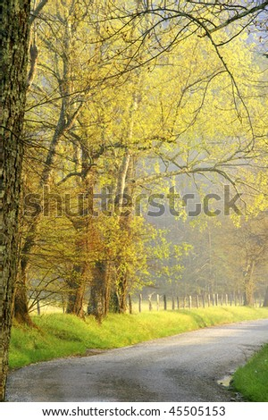Springtime Morning on Sparks Lane, Great Smoky Mountains National Park Vertical