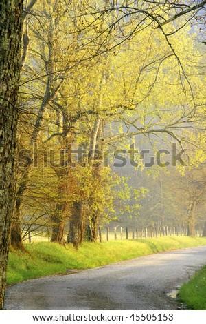 Springtime Morning on Sparks Lane, Great Smoky Mountains National Park Vertical - stock photo