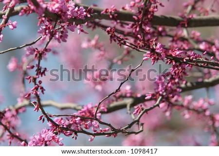 springtime tree - stock photo