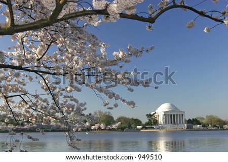 springtime view of jefferson memorial with cherry blossoms blooming - stock photo