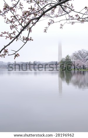 Springtime Washington Monument Lost in the Fog Vertical - stock photo