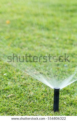 sprinkler head watering the bush and grass in the garden