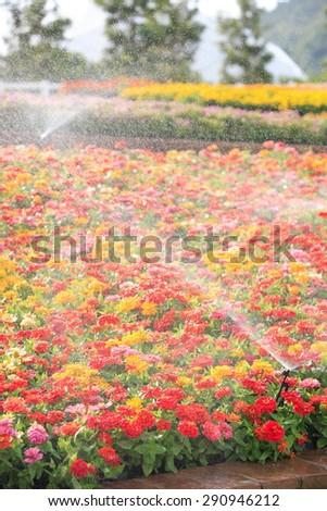 sprinkler head watering the flower - stock photo