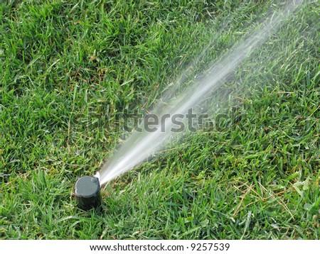 Sprinkler spraying water on  grass in field - stock photo