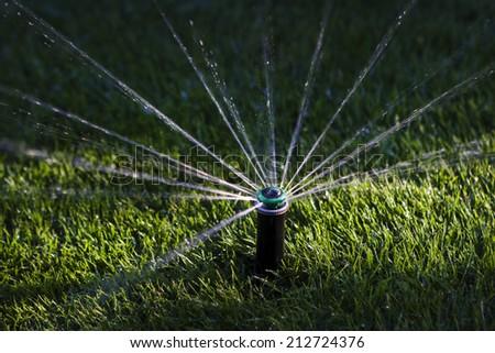 Sprinkler watering grass in sunset - stock photo