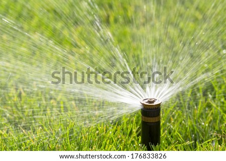 sprinkler watering new lawn - stock photo