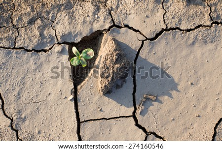 Sprout fighting for life with natural forces in dried cracked mud - stock photo
