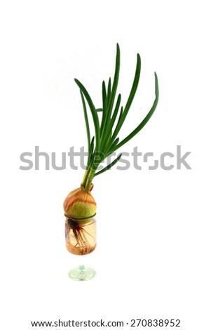 Sprout green onions as a food ingredient